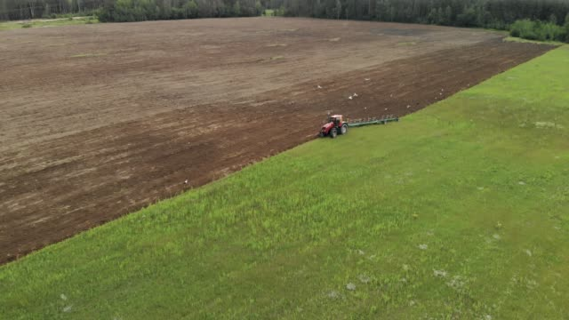 vídeos de stock e filmes b-roll de tractor plows the soil, birds fly around. aerial view - terra cultivada