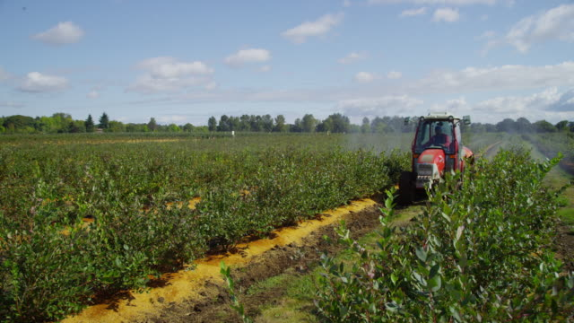 Tractor spraying blueberry field. video