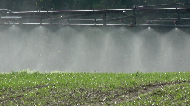 tractor spraying crop  field, sprayer detail - fertilizzante video stock e b–roll