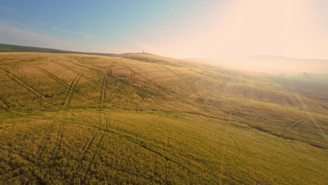 AERIAL Tractor tracks among wheat field in Tuscany video