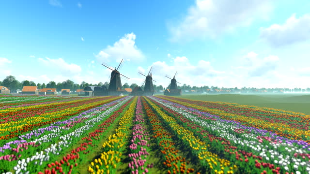 Traditional Dutch windmills with vibrant tulips in the foreground over blue sky, tilt video