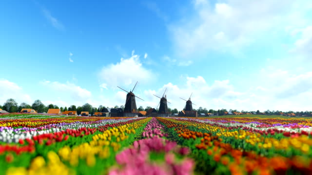 Traditional Dutch windmills with vibrant tulips in the foreground over timelapse blue sky Traditional Dutch windmills with vibrant tulips in the foreground over timelapse blue sky tulip stock videos & royalty-free footage