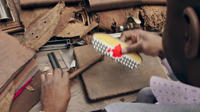 traditional way to create cohibas. cuban man rolling handmade cigars. - sigaro video stock e b–roll