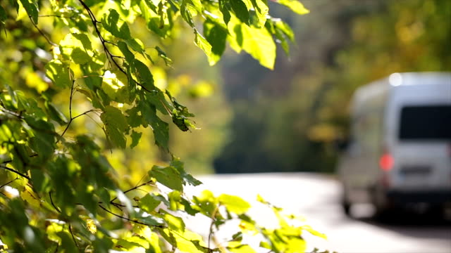 Traffic on the road. Leaves near the road. The car drives along a country road in the autumn forest. Branches with leaves in the foreground. vänskap stock videos & royalty-free footage