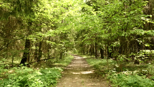 Trail in the park. Smooth and slow steady cam shot. Clean and bright daytime. video