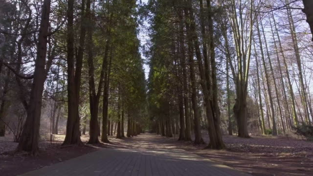 Trail in the park video
