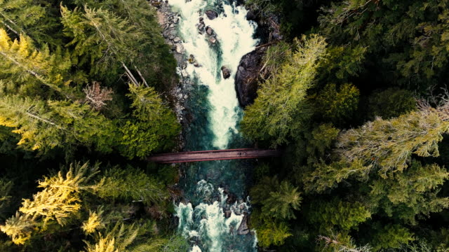 trail walkers crossing river bridge in natural old growth forest trees aerial high above looking down - trekking video stock e b–roll