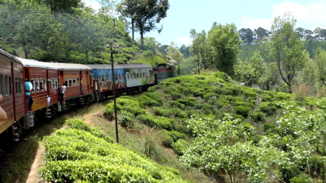 Train in Sri Lanka with Tea Plantations A train in Sri Lanka travelling through tea plantations. Shot from the train. sri lanka stock videos & royalty-free footage