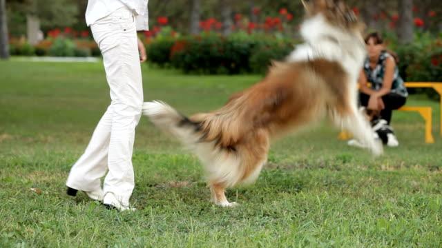 cane addestrato - cane addestrato video stock e b–roll