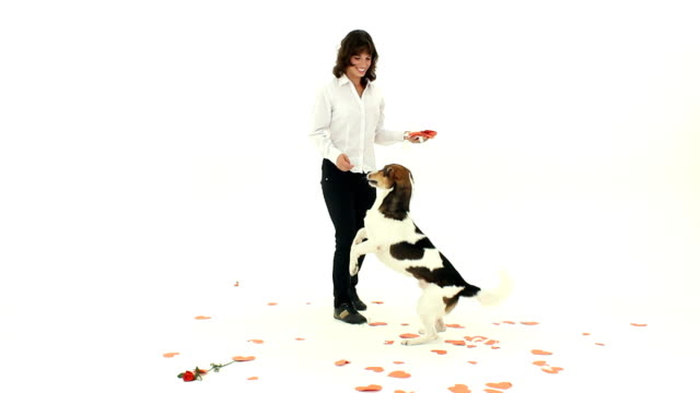 Trained dog video