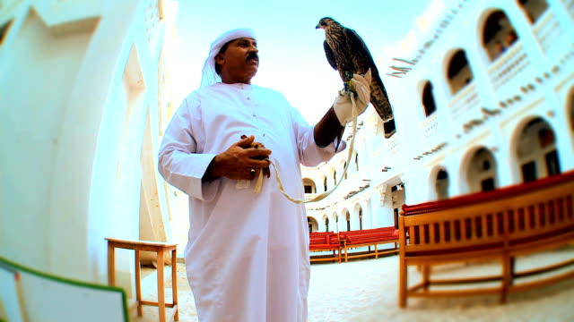 Trained Falcon video