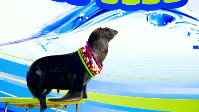 trained seals - circus stok videoları ve detay görüntü çekimi