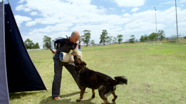 trainer training a shepherd dog in the field 4k - mandriano video stock e b–roll
