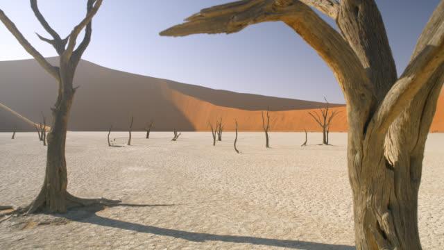 vidéos et rushes de ws tranquil deadvlei arbres dans la casserole ensoleillée d'argile blanche contre la dune de sable, namibie, afrique - arbre tropical