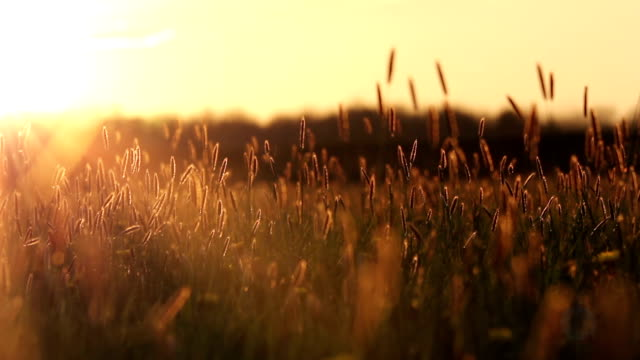 Tranquil Meadow video