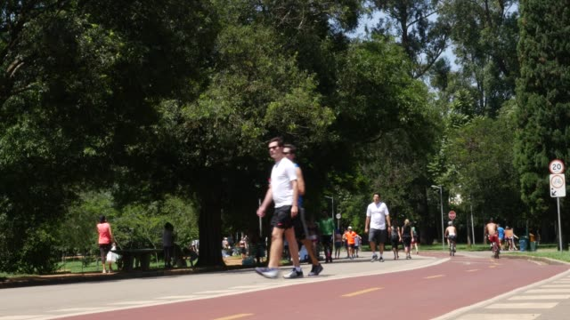 tranquil scene in the park, summer time - são paulo video stock e b–roll