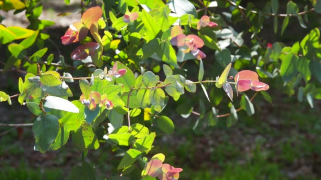 lugn solig park - eucalyptus leaves bildbanksvideor och videomaterial från bakom kulisserna