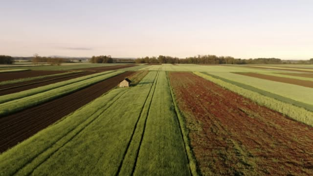 vídeos de stock e filmes b-roll de ws tranquil,idyllic,sunny rural field with farming shed,prekmurje,slovenia - terra cultivada