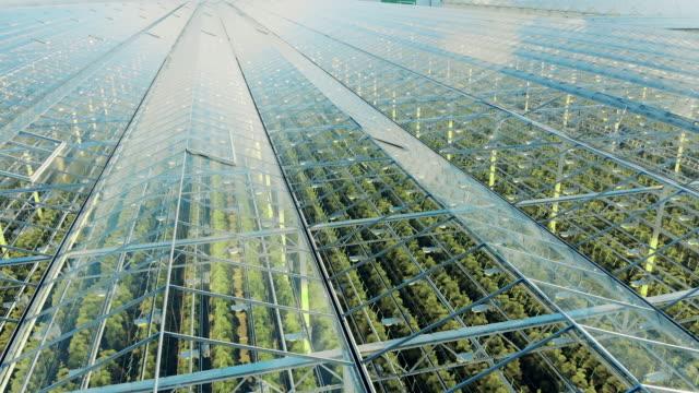 vídeos de stock e filmes b-roll de transparent greenhouse premises with green plantations inside - estufa estrutura feita pelo homem