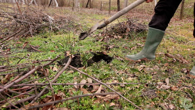 Transplanting new scion with roots, dibble fruit tree video