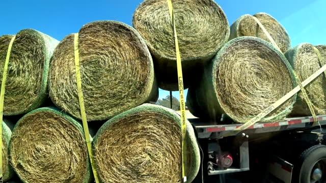 vidéos et rushes de transport de rouleaux de foin sur le camion - foin