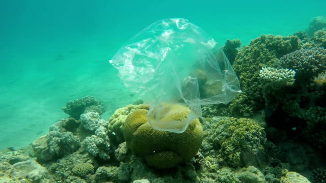 trash plastic bag floats over coral reefs in the red sea - clima video stock e b–roll