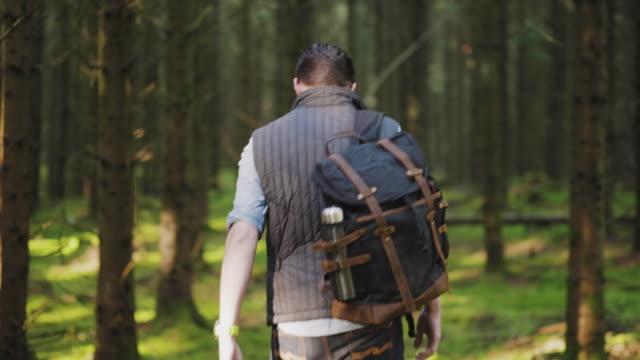 wanderer wandern an einem herbsttag durch einen pinienwald - hinter stock-videos und b-roll-filmmaterial