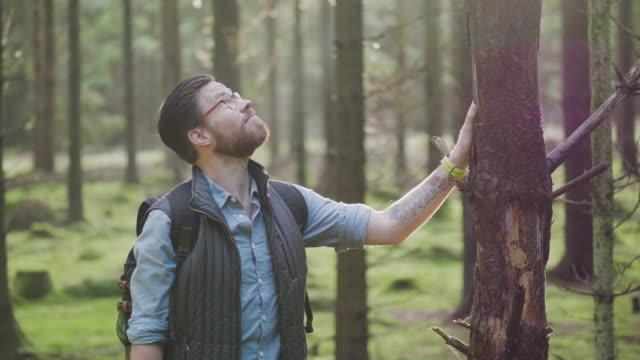 Traveling man vandring genom en tallskog på en höst dag video