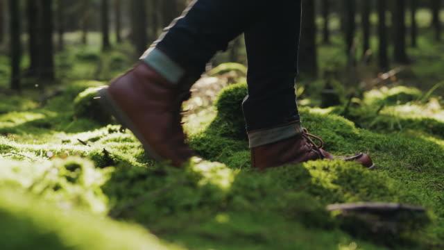 traveling man vandring genom en tallskog på en höst dag - pine forest sweden bildbanksvideor och videomaterial från bakom kulisserna