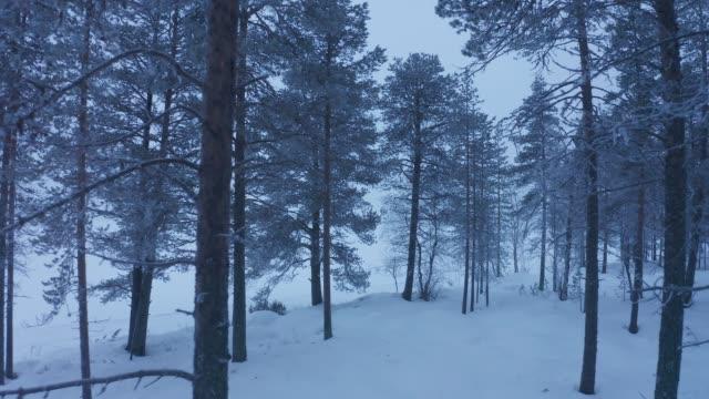 lapland, finlandiya'daki beyaz büyülü ormanda seyahat etmek - bakir yer stok videoları ve detay görüntü çekimi