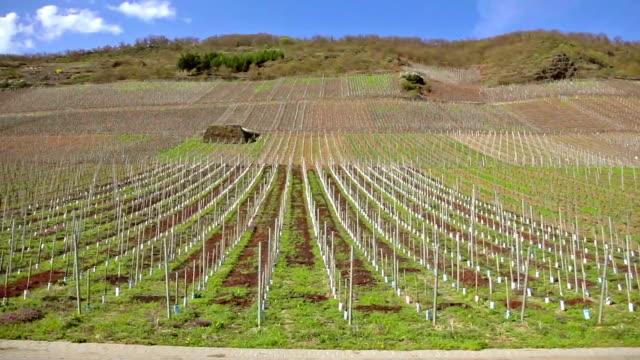 Travelling shot of vineyards along the Rhine valley, Germany video