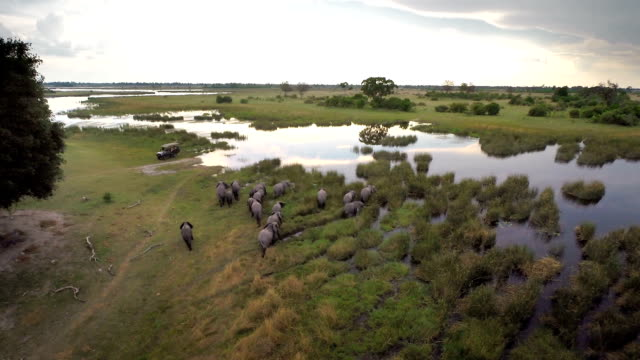 traversing the wetlands - wildlife travel stock videos and b-roll footage