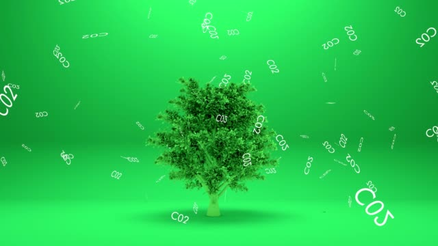 tree absorbs co2 or tree absorb carbon dioxide - anidride carbonica video stock e b–roll