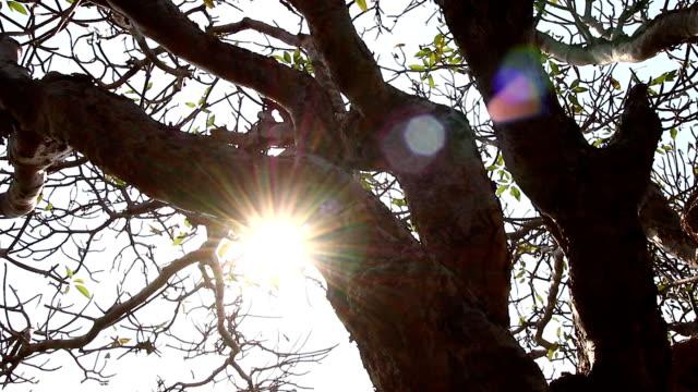 Tree at dawn,Shot Motorized Slider video