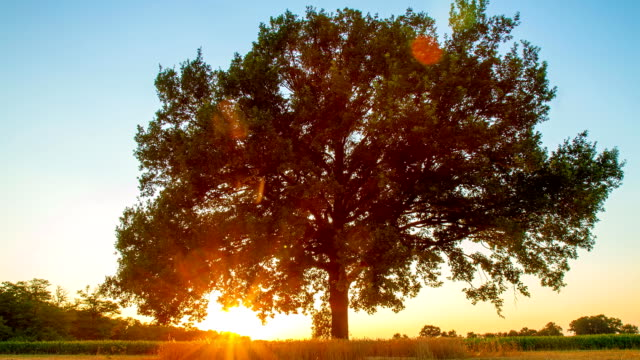 HD TIME-LAPSE: Tree At Sunrise video
