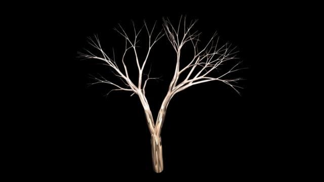 tree bare + alpha - gren plantdel bildbanksvideor och videomaterial från bakom kulisserna