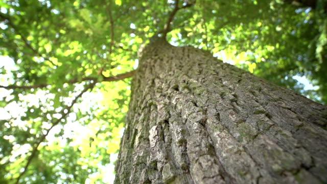 tree bark от дуб - дубовый лес стоковые видео и кадры b-roll