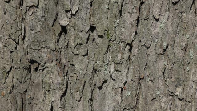 Tree bark sunny day autumn background