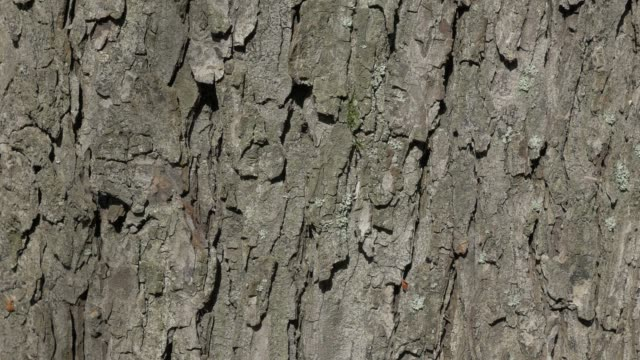 stockvideo's en b-roll-footage met boom schors zonnige dag herfst achtergrond - schors