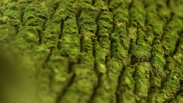 Tree bark texture video