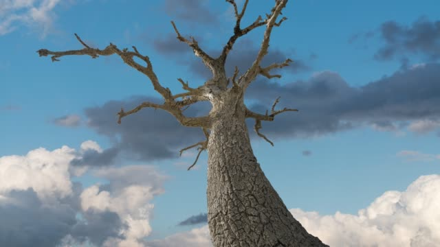 A tree became alone in steppe time lapse