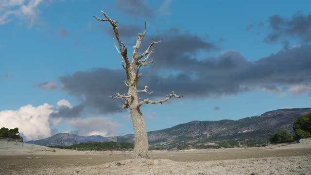 vídeos de stock, filmes e b-roll de uma árvore tornou-se sozinho no lapso de tempo do estepe - erodido