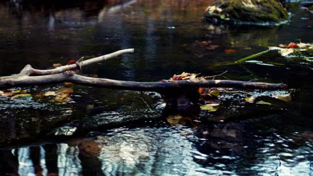 Ast im Fluss – Video