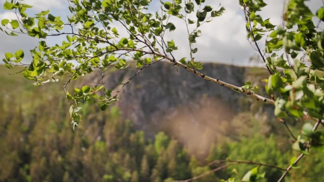 a tree branch swings under the pressure of the wind in the mountains - quadcopter filmów i materiałów b-roll