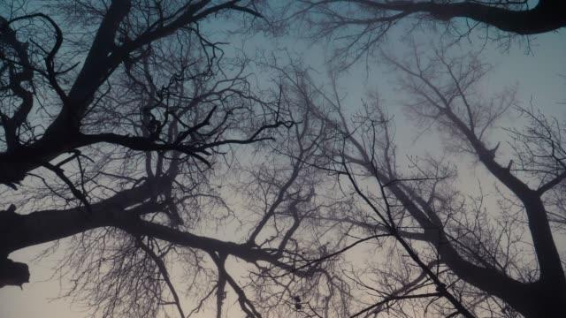 baumzweige im nebel - verbogen stock-videos und b-roll-filmmaterial