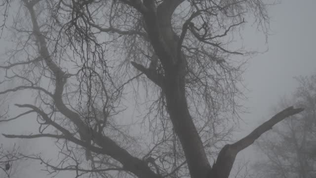 tree branches in the fog