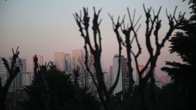 日没時に木の枝のシルエットと都市の建物 - 都市 モノクロ点の映像素材/bロール