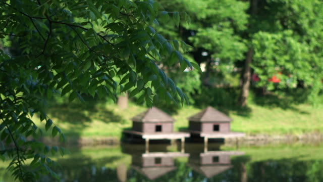 Tree branches sway in the park against the background of two wooden houses for ducks