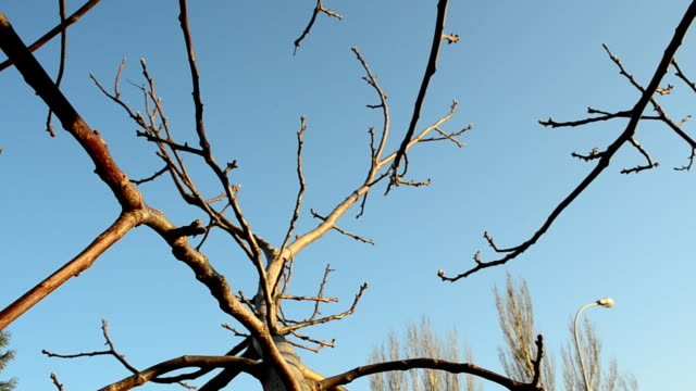 Tree branches video