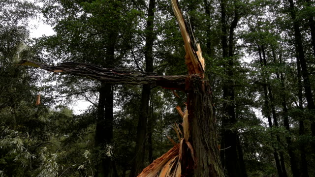 tree broken by a hurricane. - gulf coast states stock videos & royalty-free footage